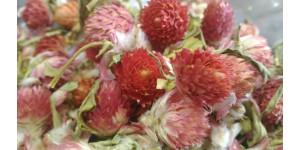 globe amaranth-red 红巧梅