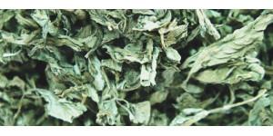 peppermint leaf 薄荷叶