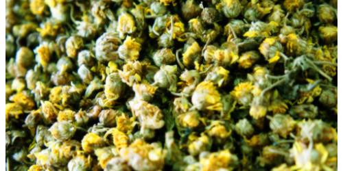 wild chrysanthemum  山菊花
