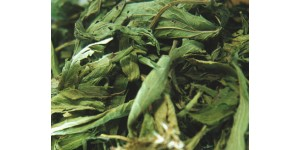 stevia rebaudianum 甜菊叶